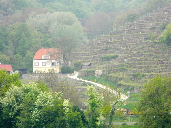 House and Vineyard Terrace, Wachau Valley Austria