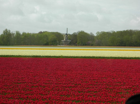 Tulip Fields From The Bus