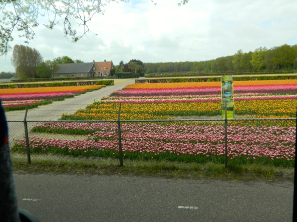 Getting Closer To Keukenhof Gardens